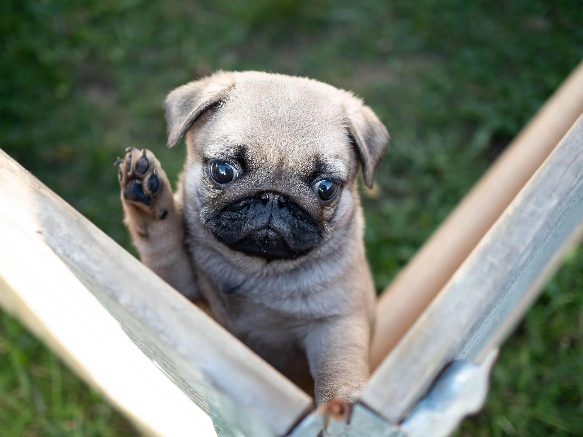 Vil noen ha meg?
