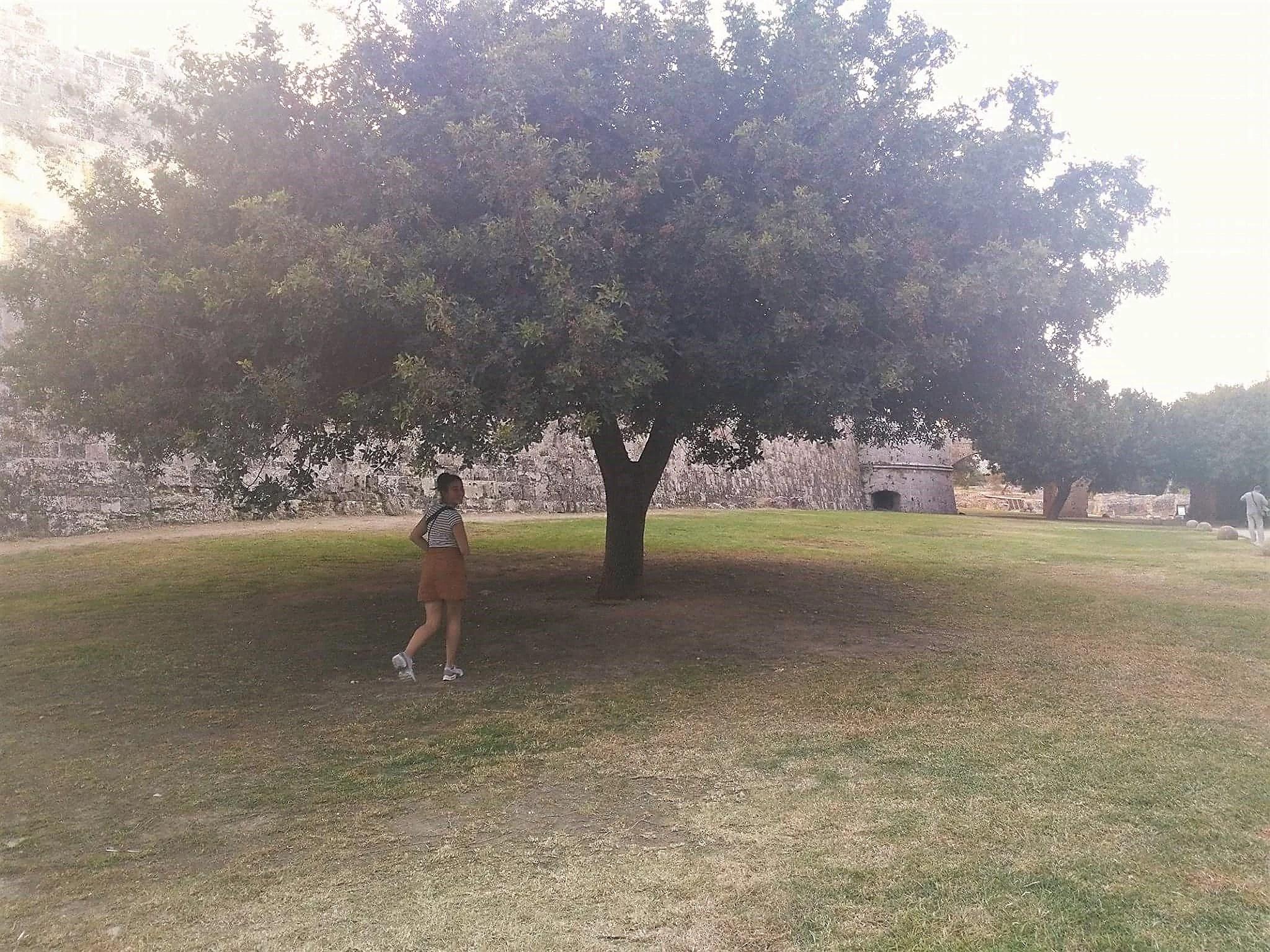 need healing? Hug a tree.
