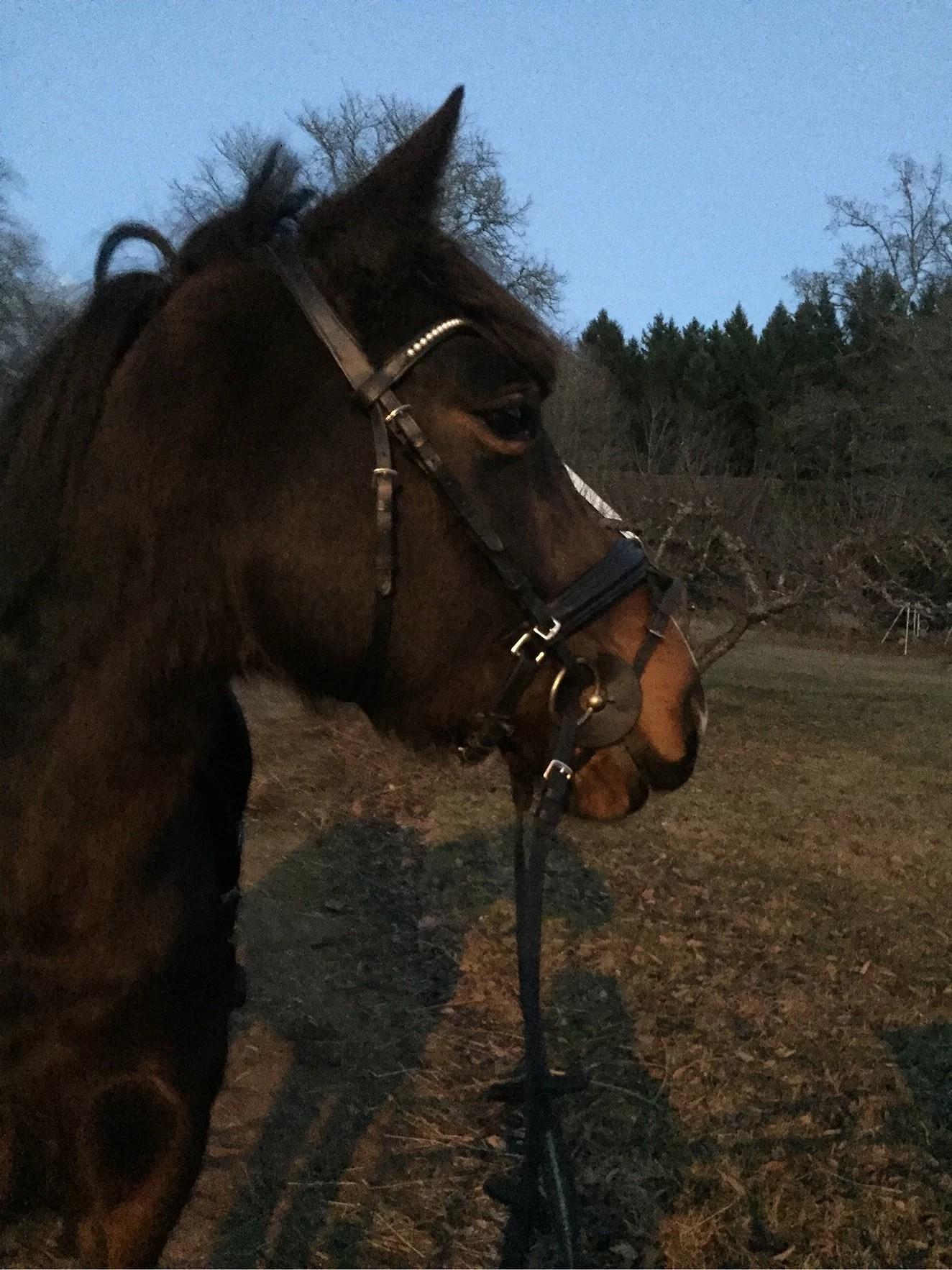Daltar vi med hästarna?