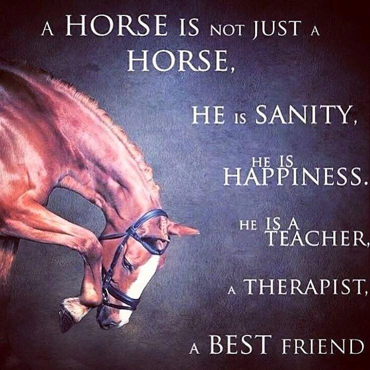 Saknar hästlivet!