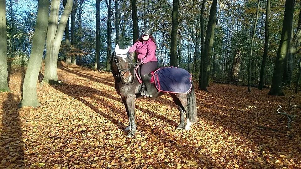 Livet med häst