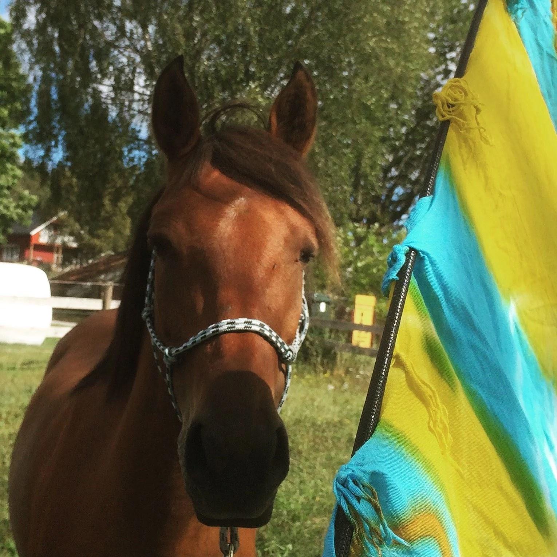 Häst och stall mys