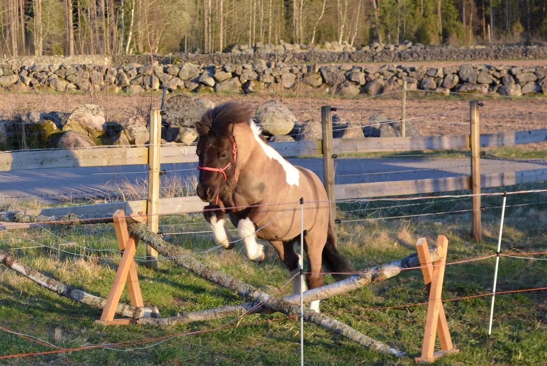 Hästarnas schema v18