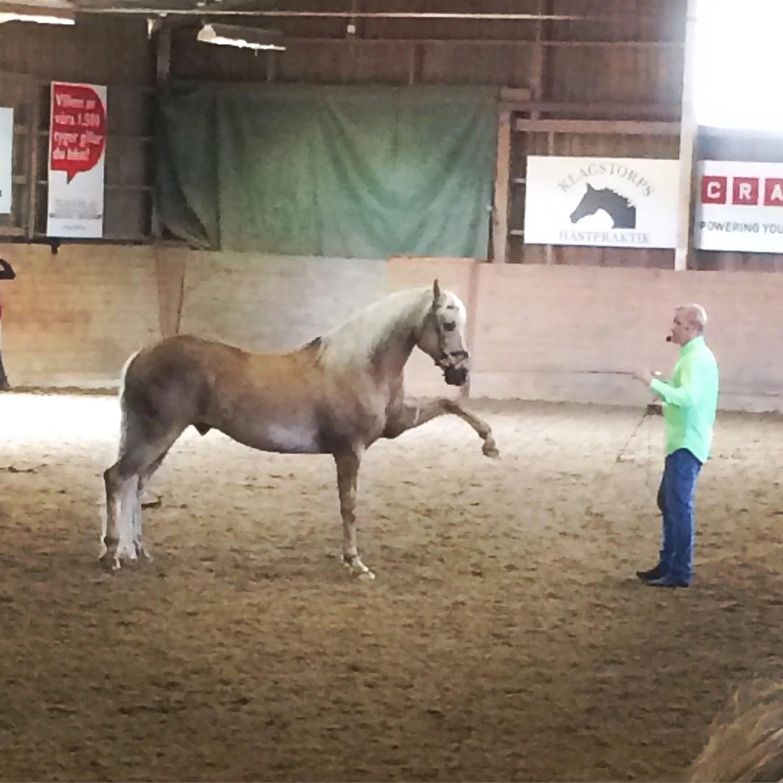 Blekinges hästmässa