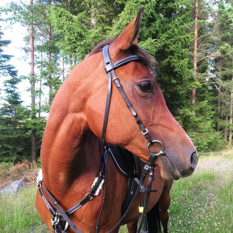 Mysig häst kväll