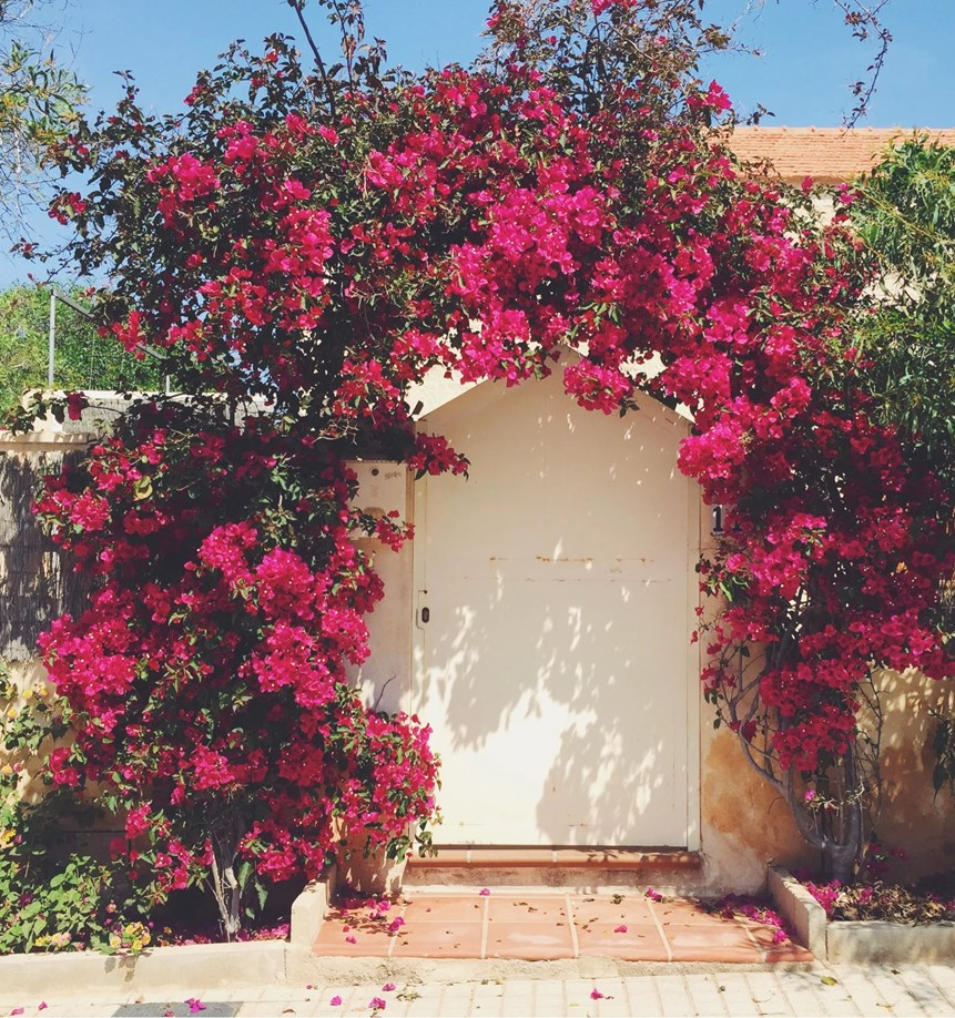 Beautiful flowery rose port in Spain, Cabo de Palos