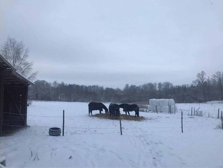 Vinter igen!