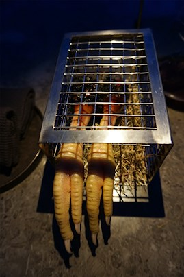 kyllingefødder, bur, mad