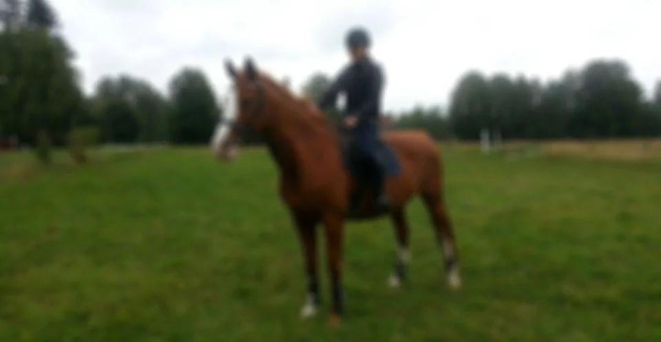 Provridning av ny häst