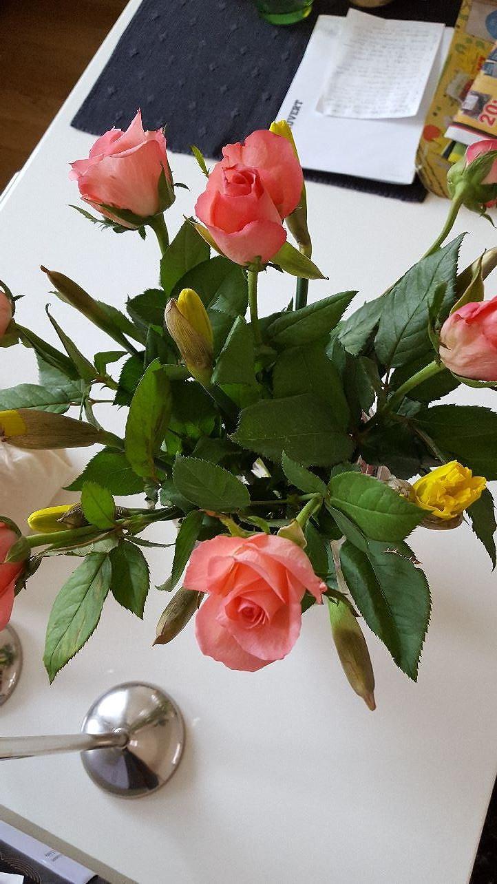 Billiga och fina blommor