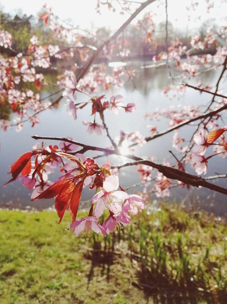 Harrastamisen ja elämäntavan ympäristövaikutukset