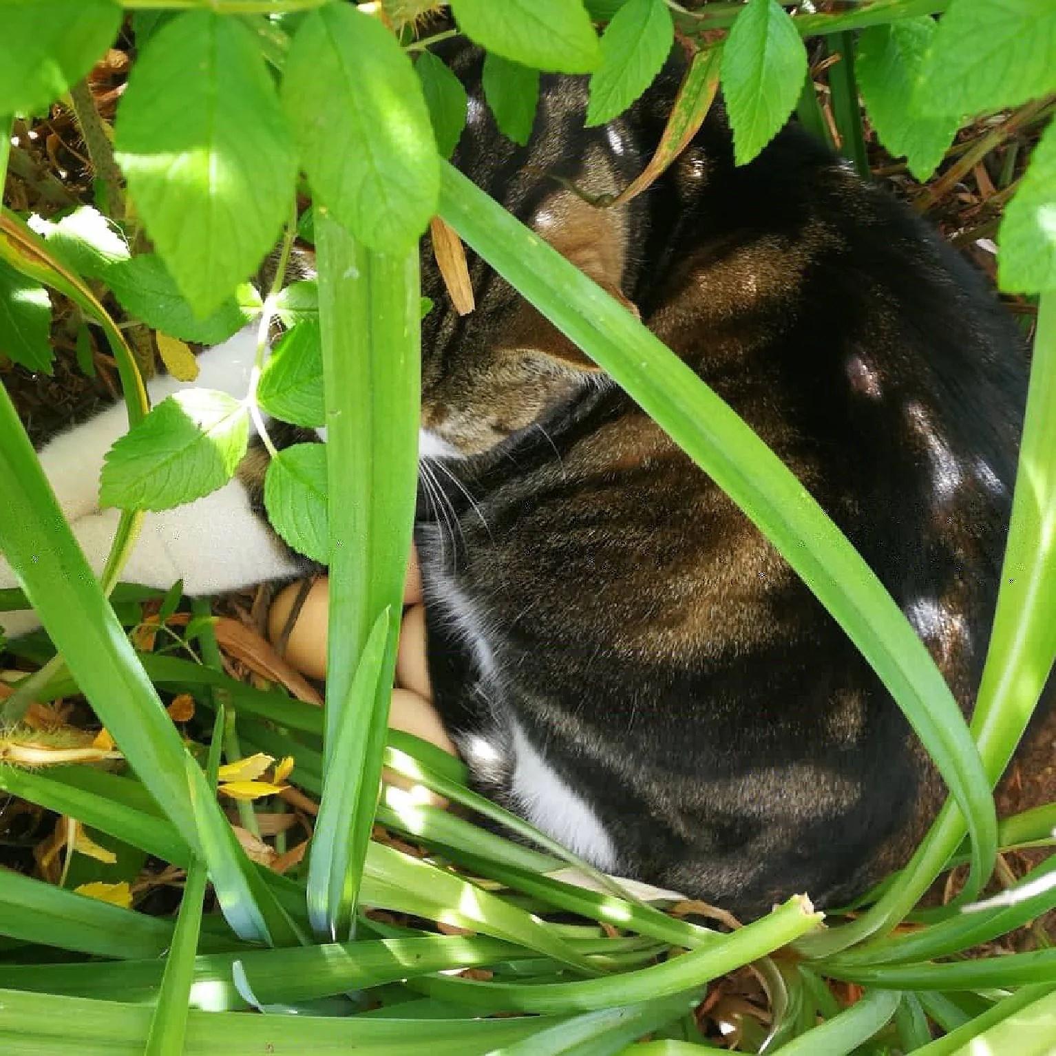 Vår ruvande katt 😻🐣