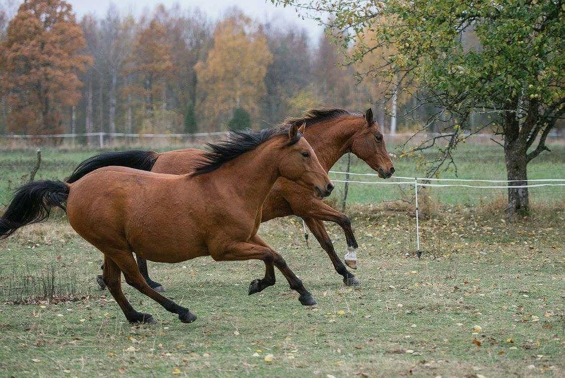 Hästarnas schema v34