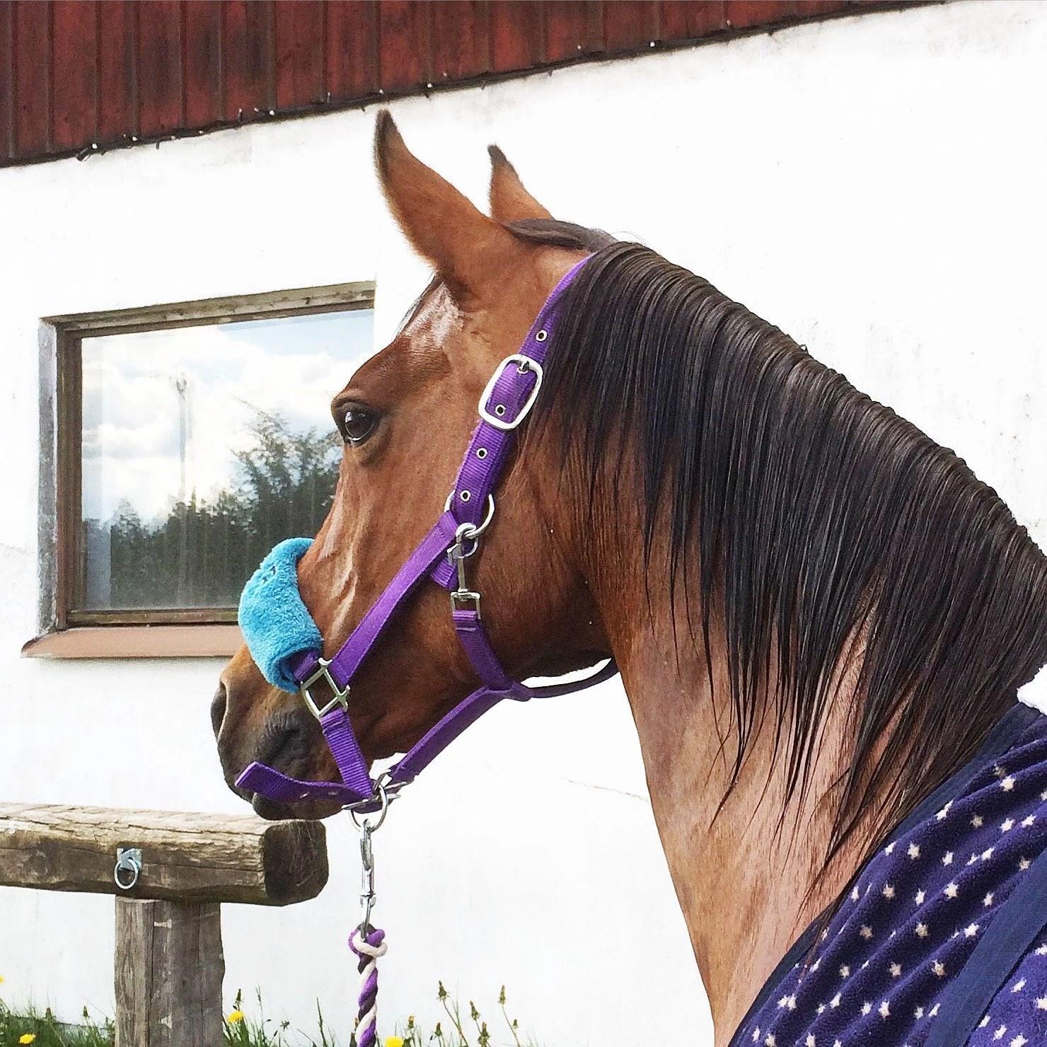 Rena hästar