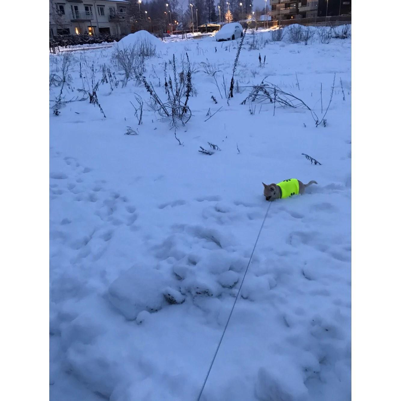 Vikaholm, snö och åter snö
