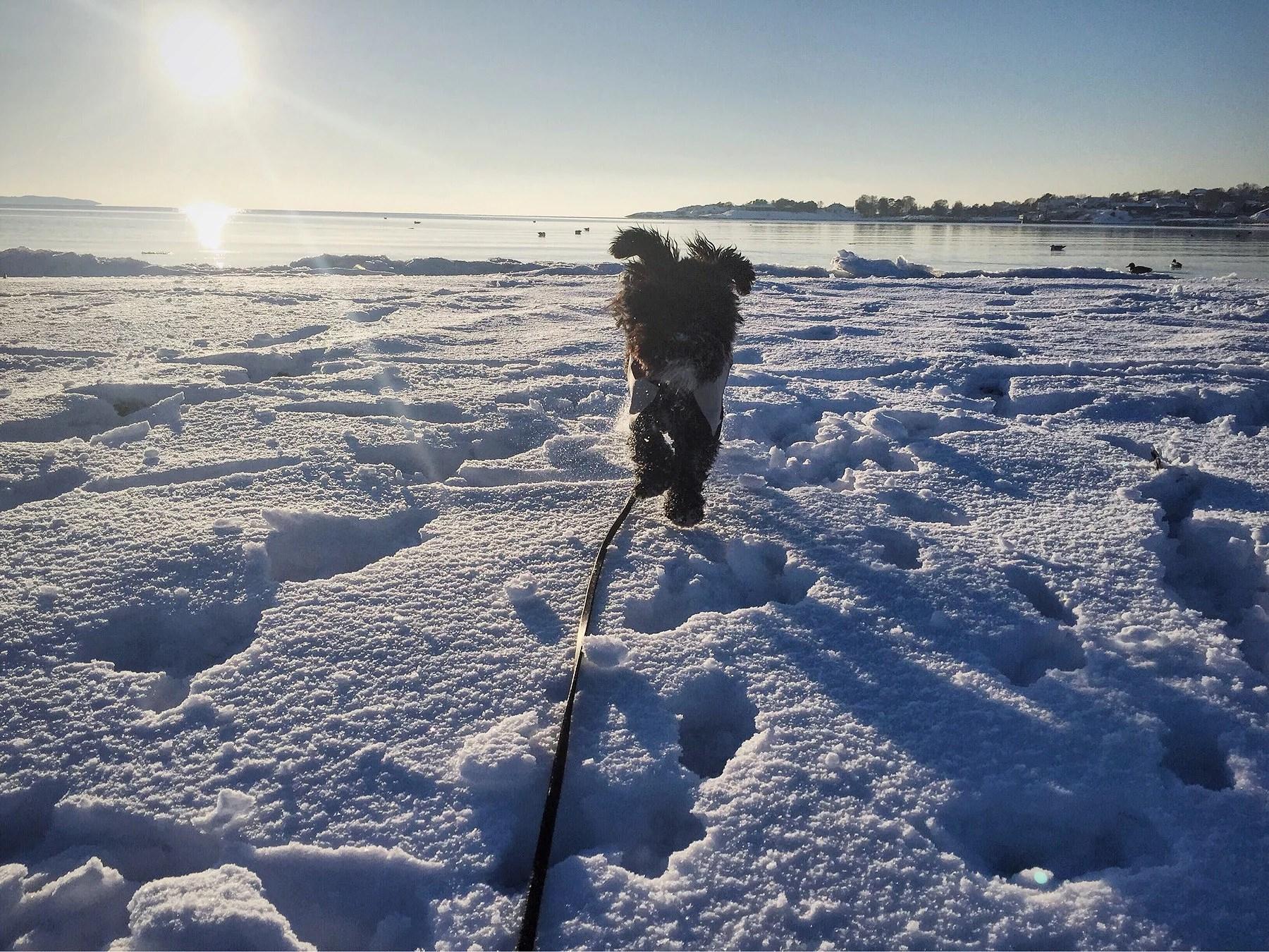 Älskar vintern ❤️