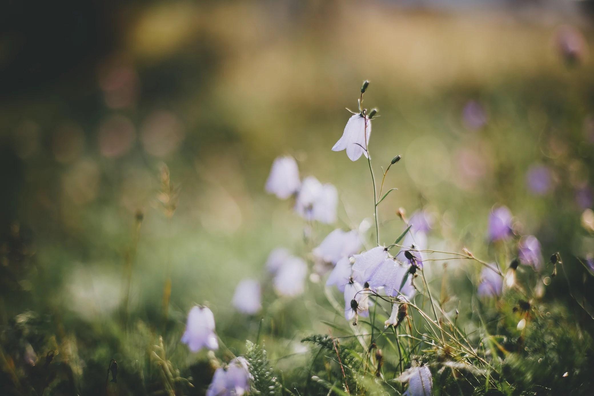 Det glittrar i gräset