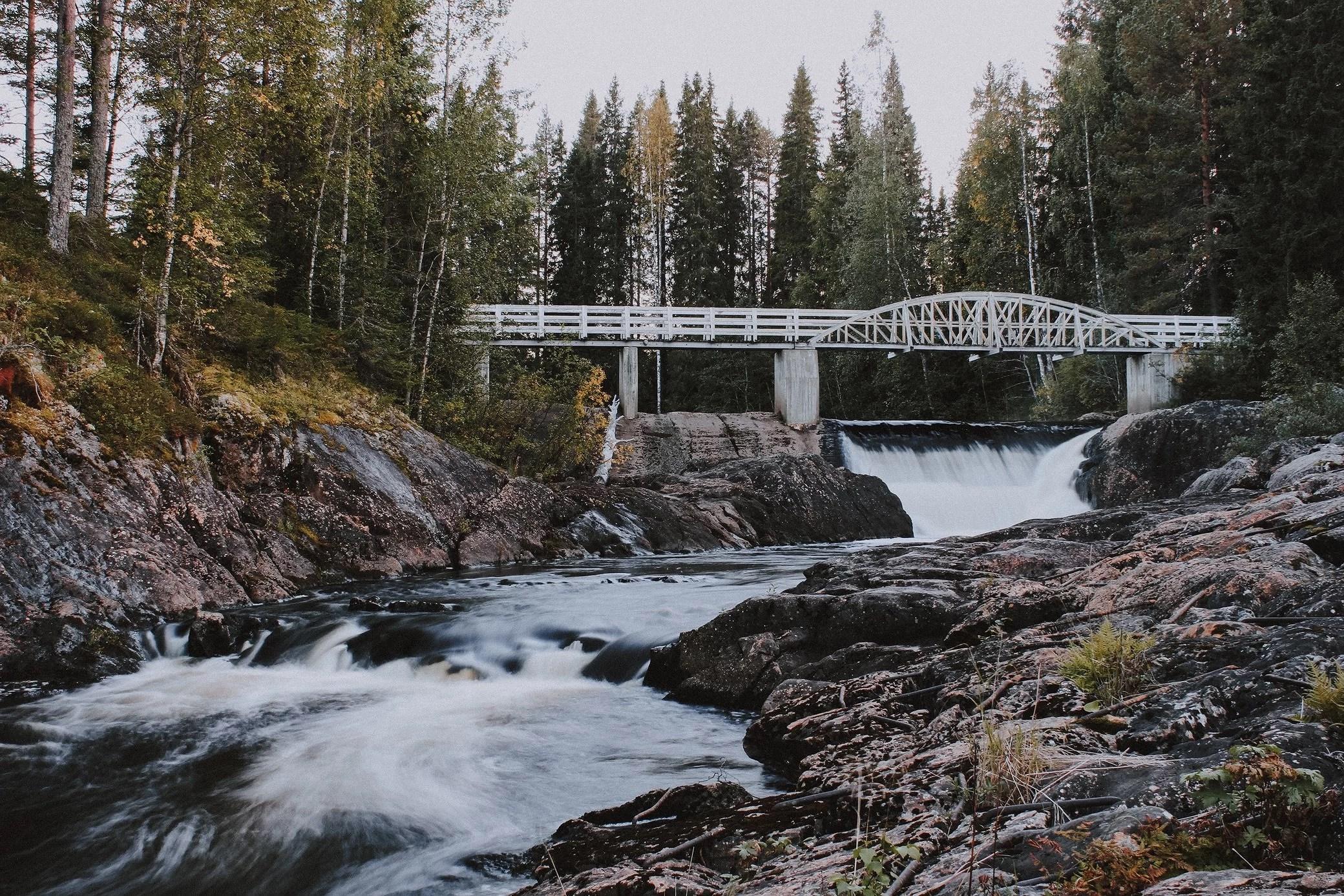 norrländska skogarna