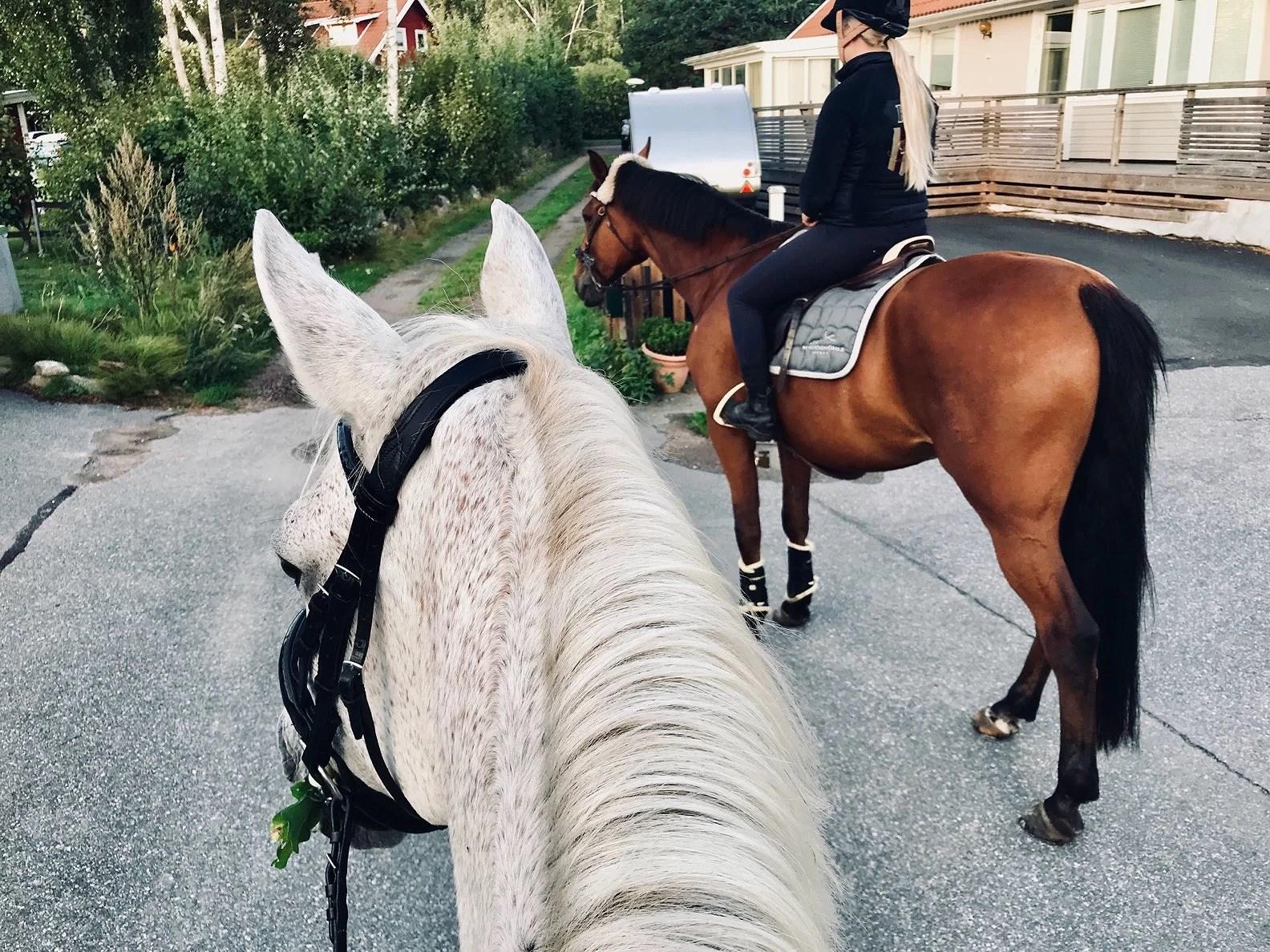 Imorgon kommer hästen!