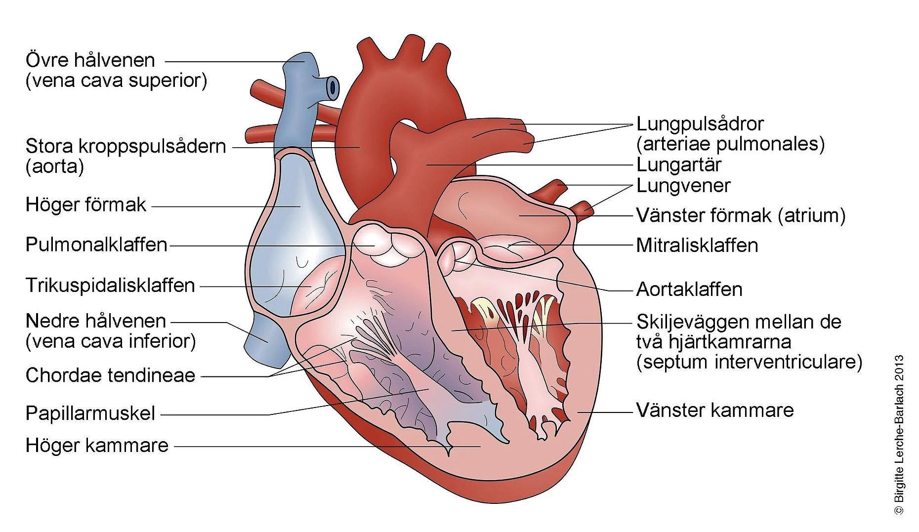 EKG maskin