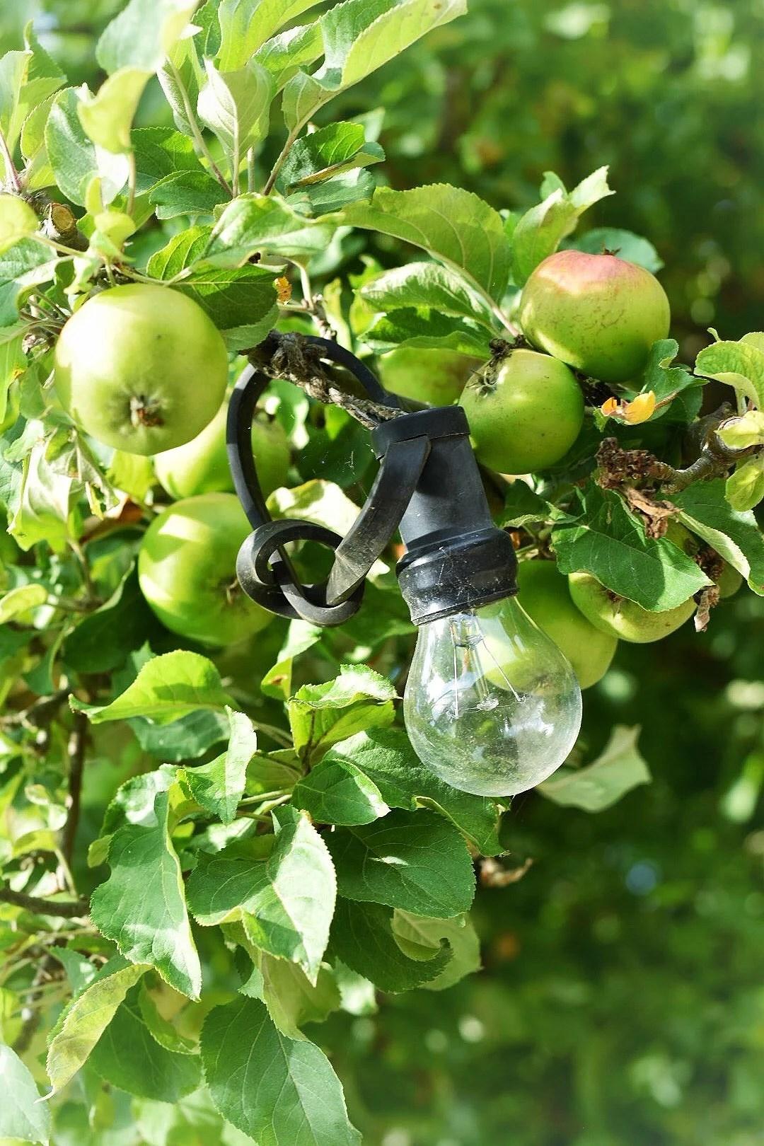 Apples & bulbs