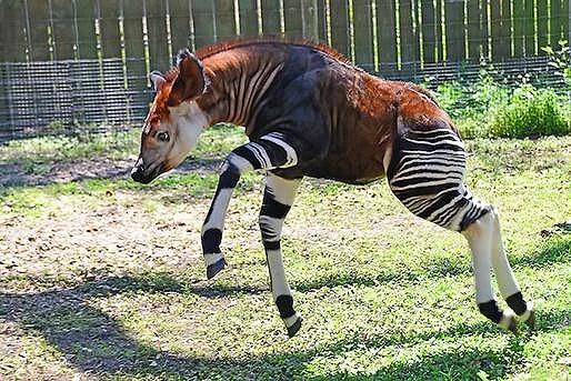 ovanliga djur