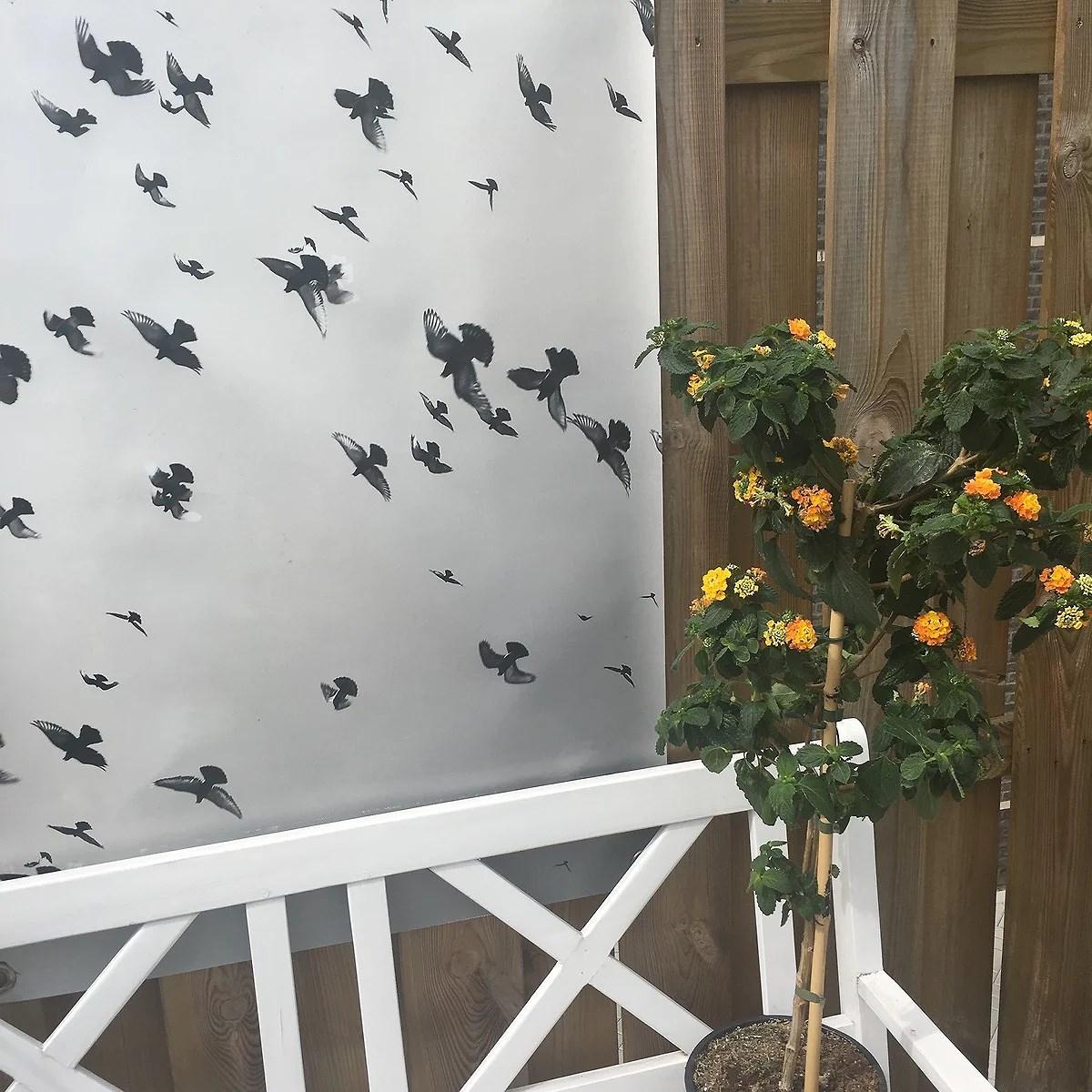 Terrasplant én balkonplant van het jaar 2017!