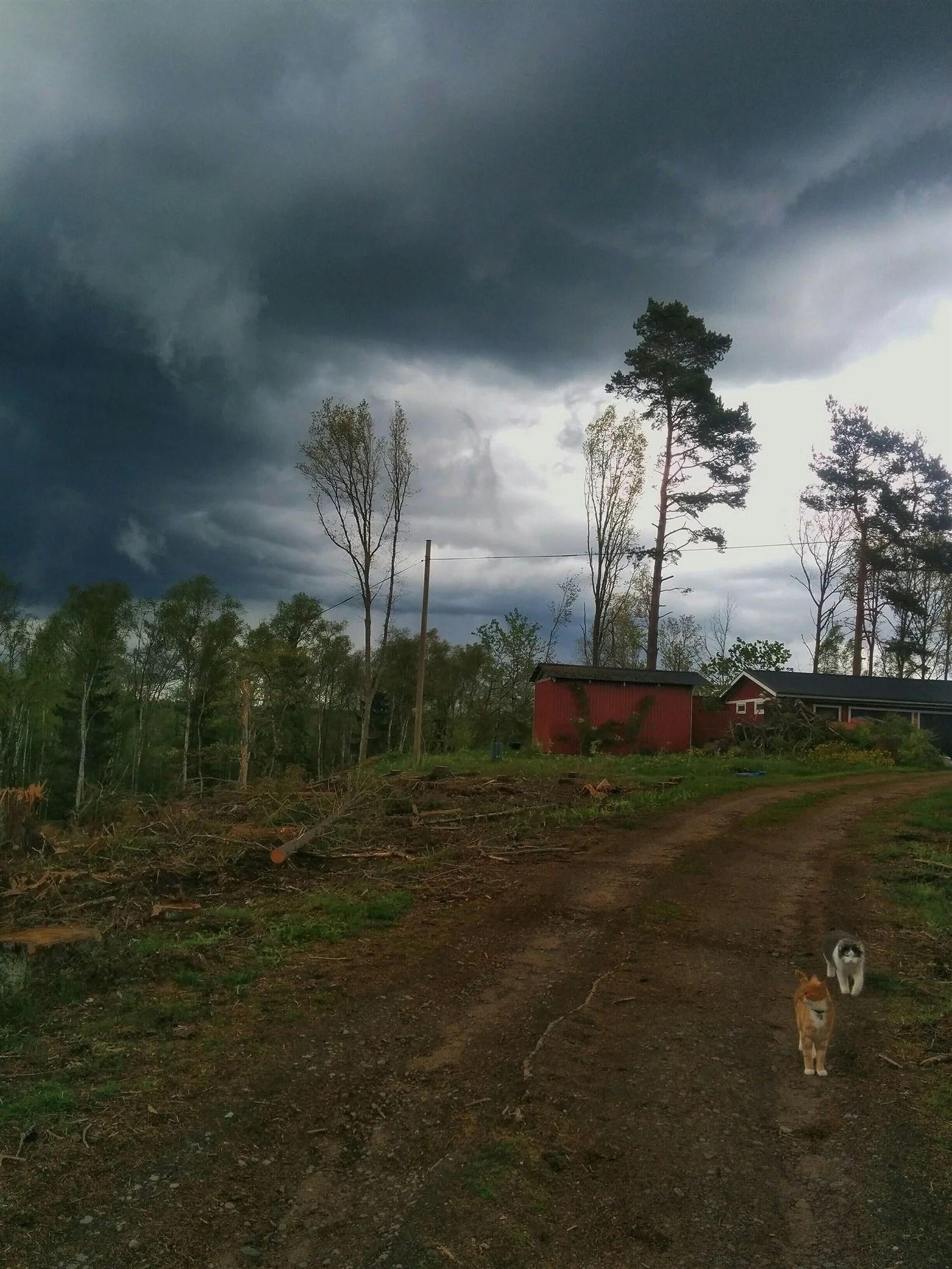 En vågad promenad