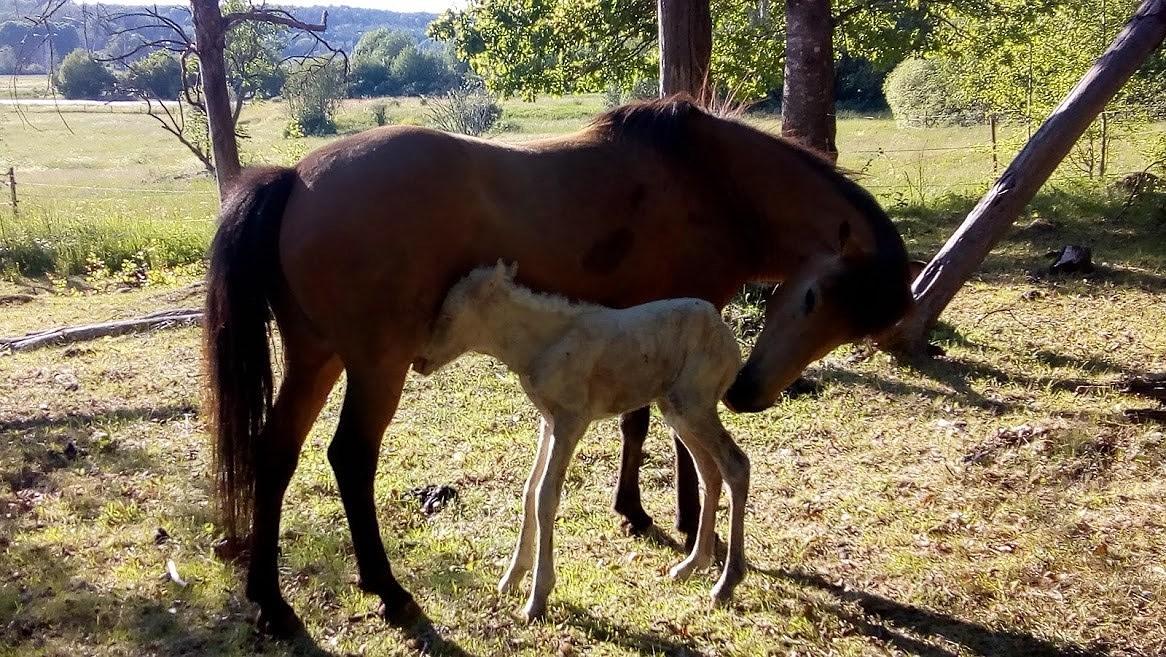 Engladís nyfödd