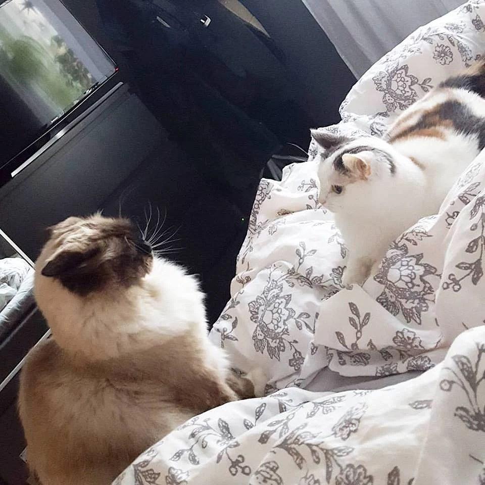 Sängmys i morse/förmiddags.