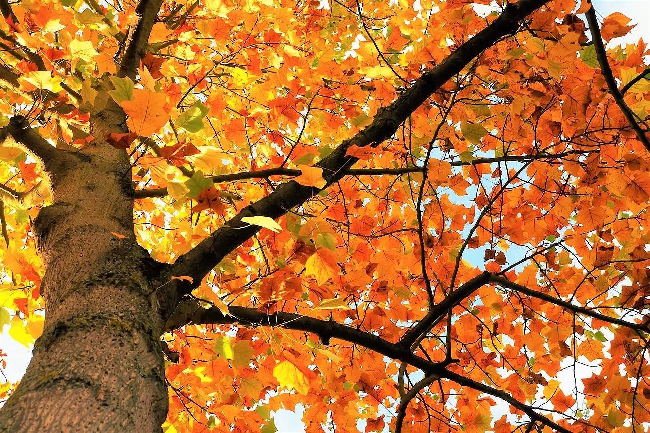 Hösten nalkas