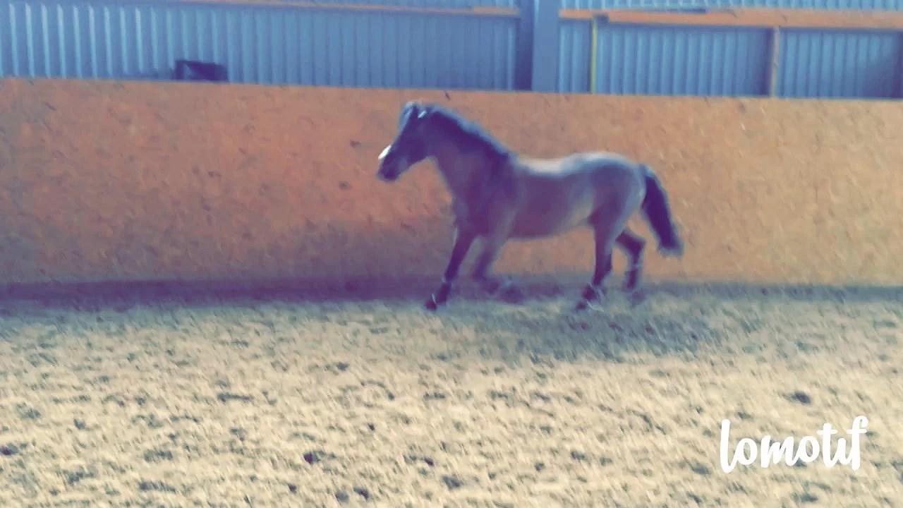 Älskade ponny - RIP