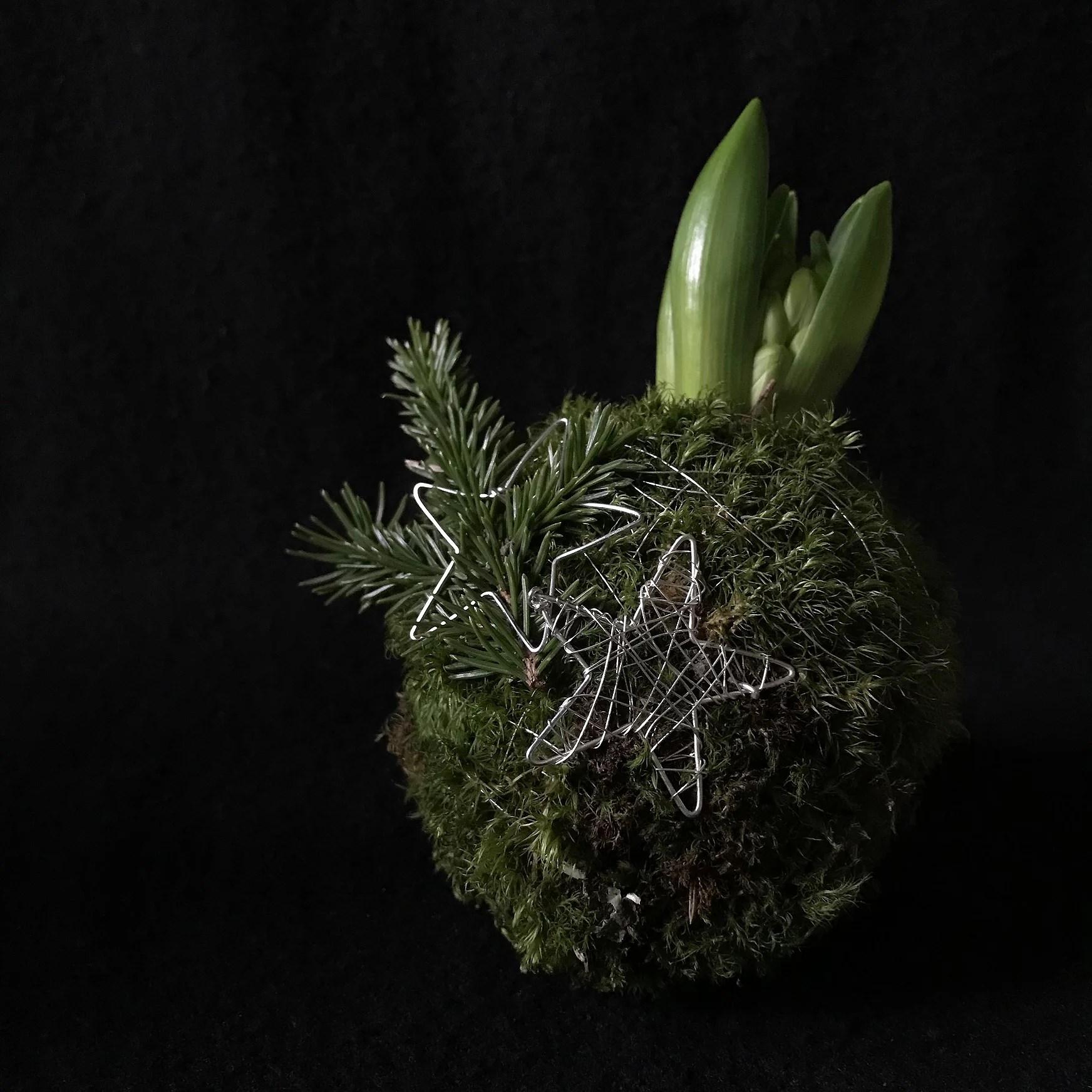 Hyacint & moss-boll - en julig gå-bort-present