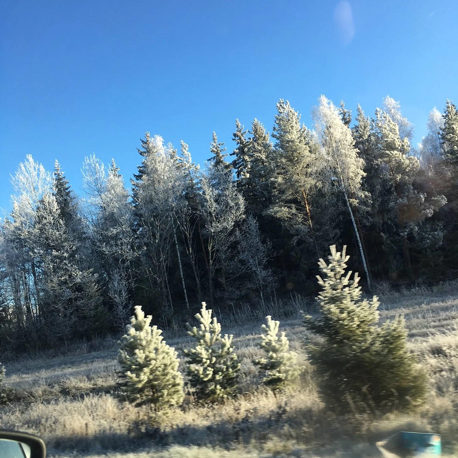 En frostig dag