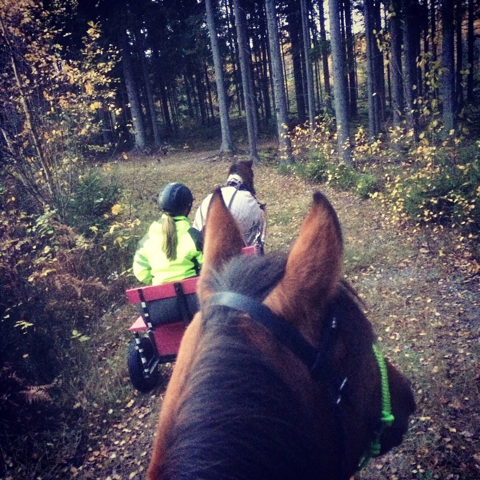 Hästarnas schema v44