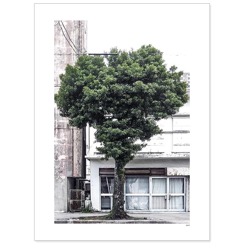 Träd - fyra posters