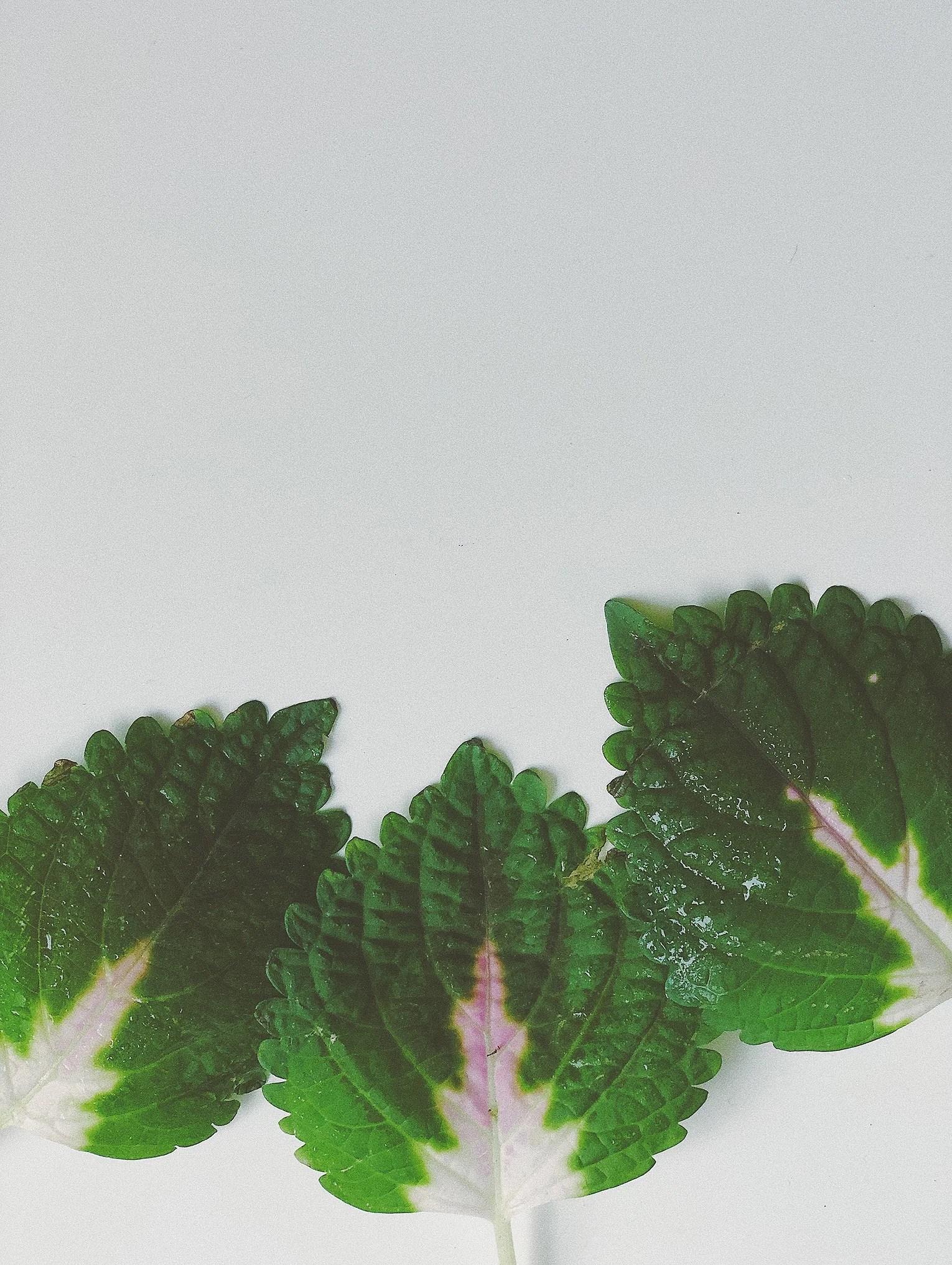 En grönskande förmiddag