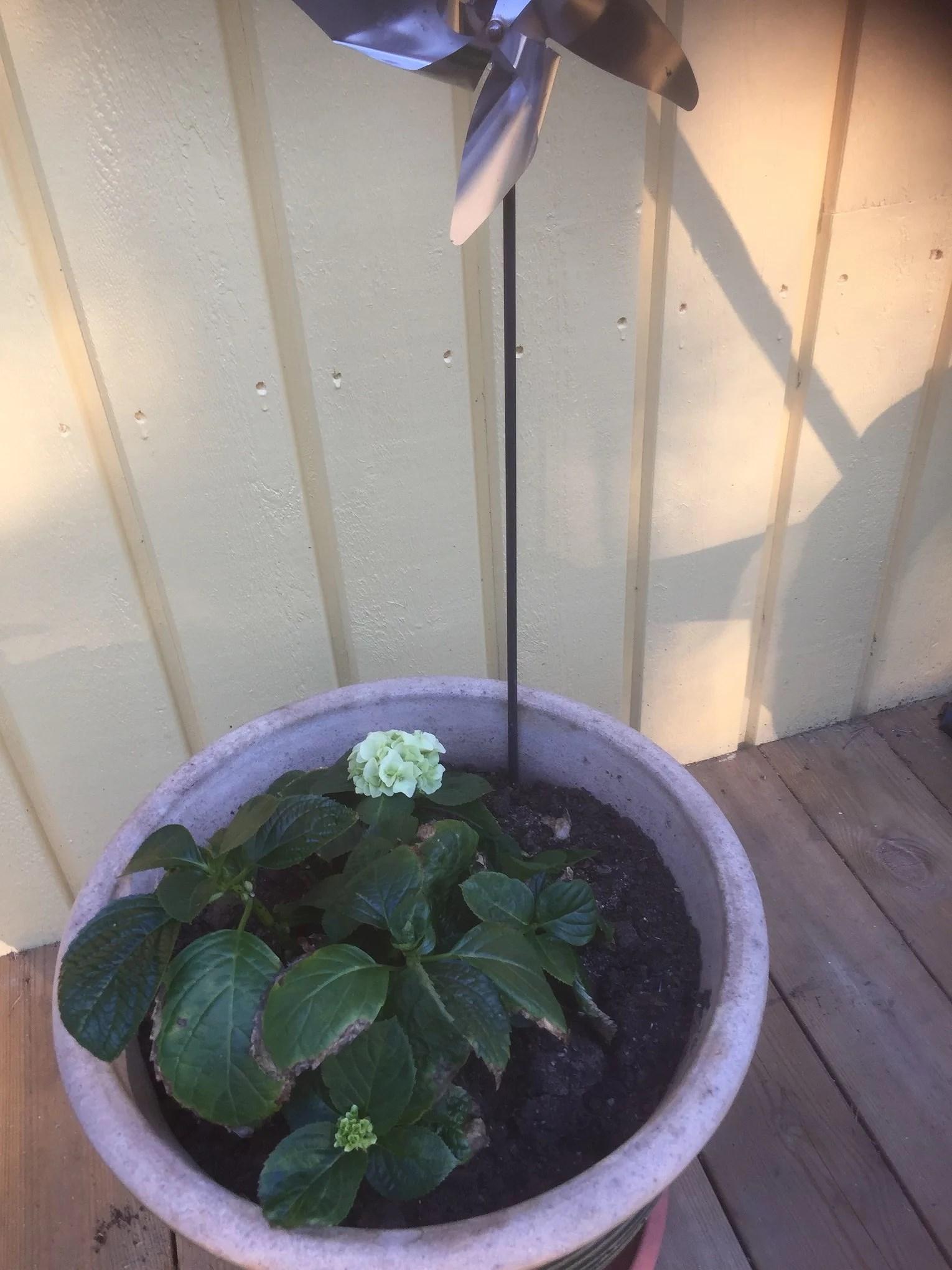 Växtsäsong 2018