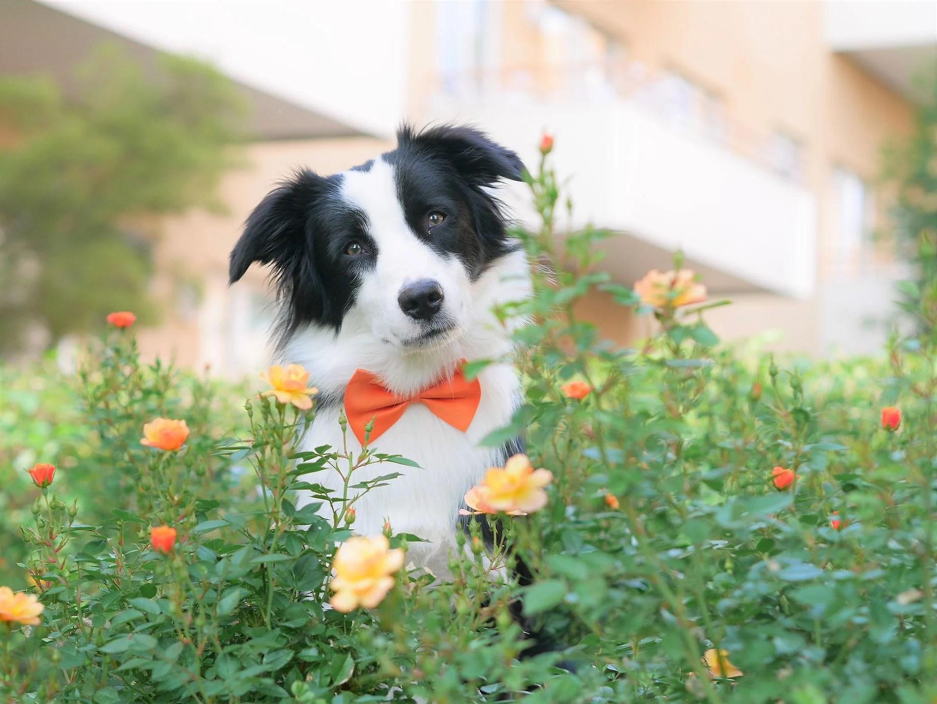 Baloo 1 år!