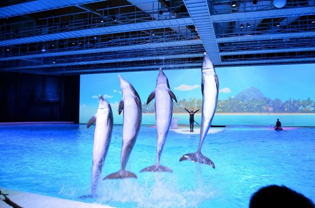 delfiner7