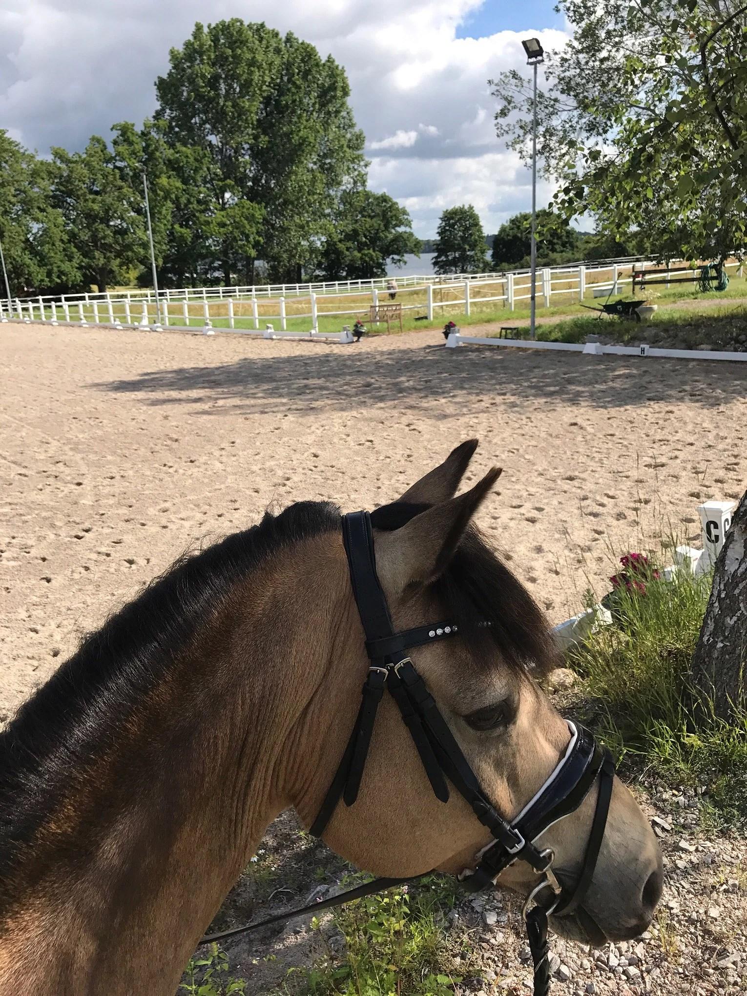 Mycket häst på schemat