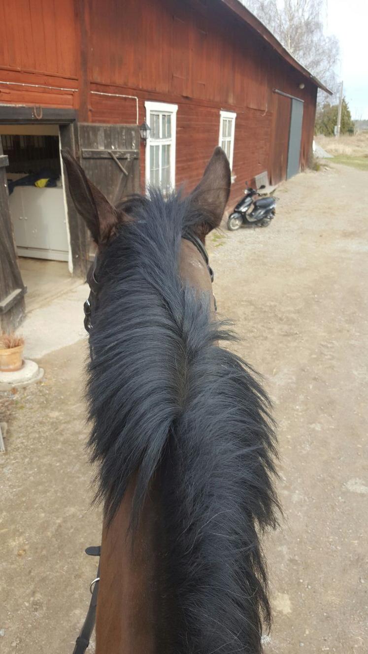 Hästar och lastbilar