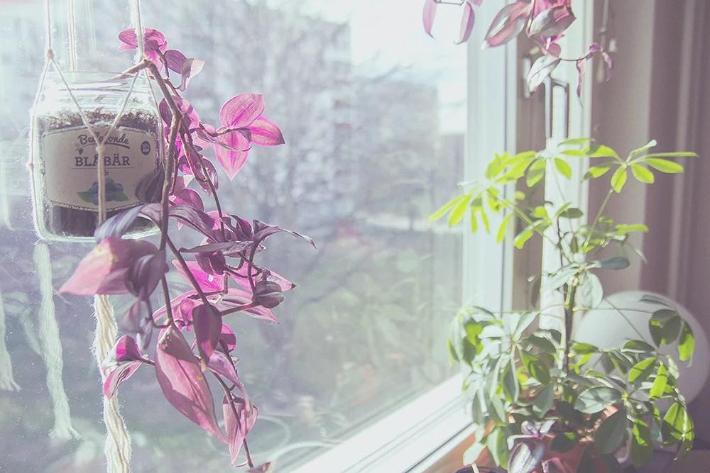 dammiga kameror och soliga vårfönster.