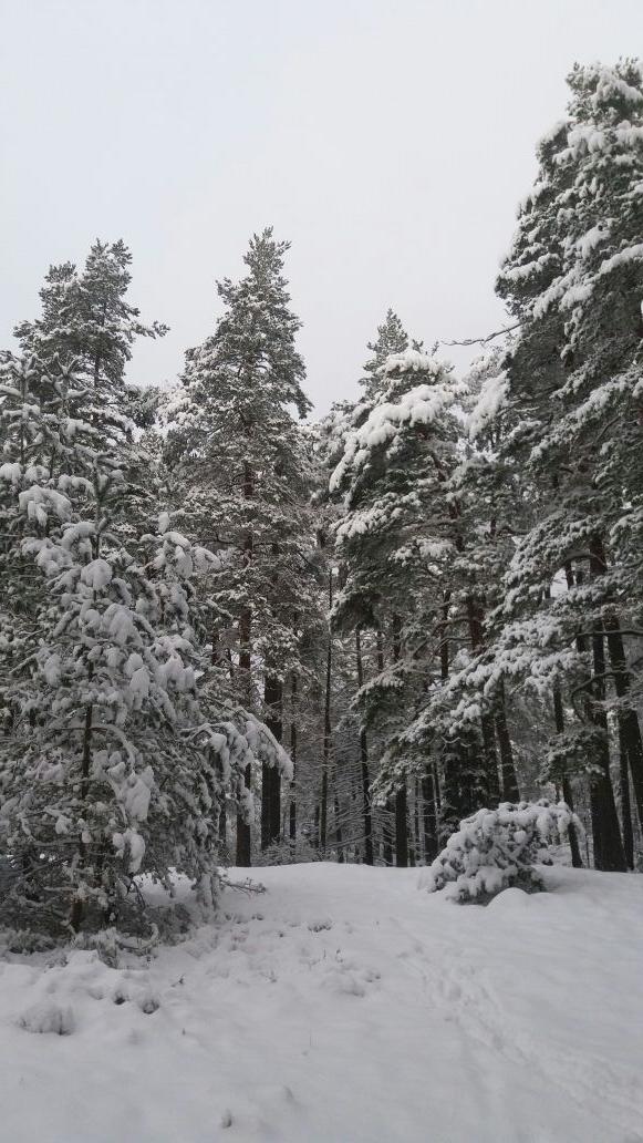snö och hund
