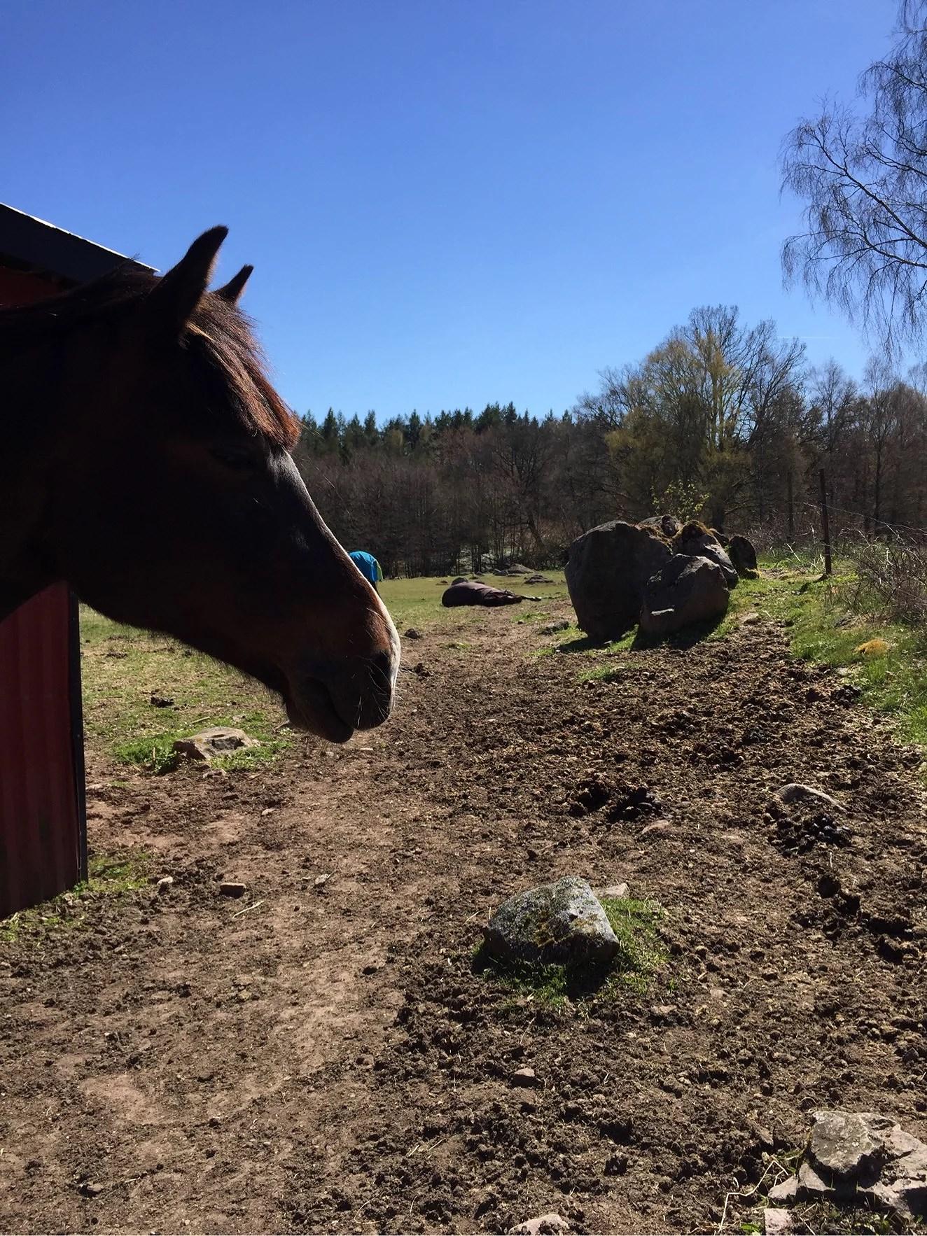 Hästarnas veckoplanering V.18
