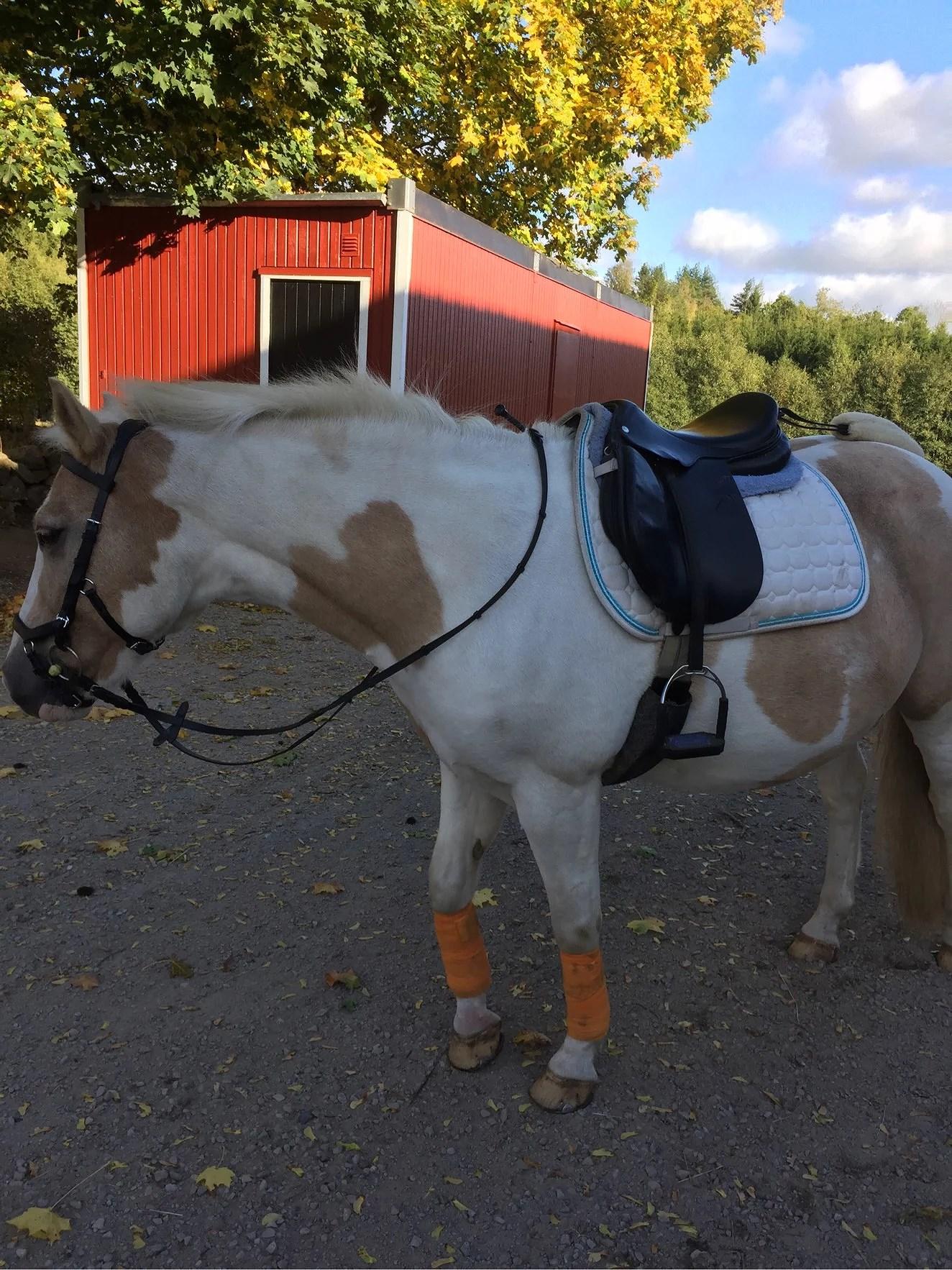 Söker D-ponny