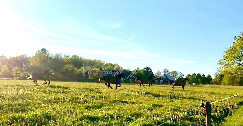 Hästarnas veckoplanering V.21