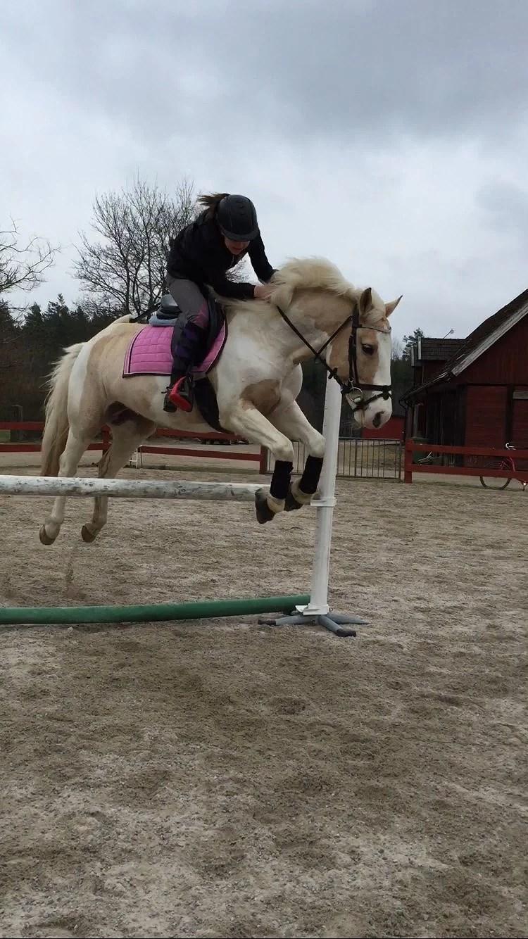 Hästarna V.18