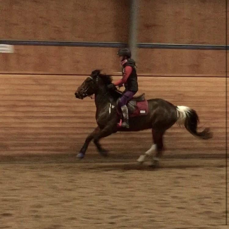 Hästarnas veckoplanering V.15