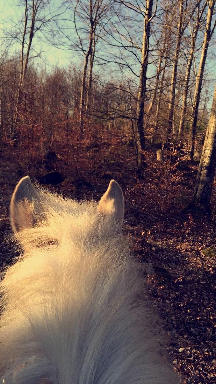 Dagens pass-Hästarna
